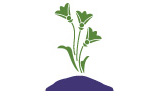 plant_sm
